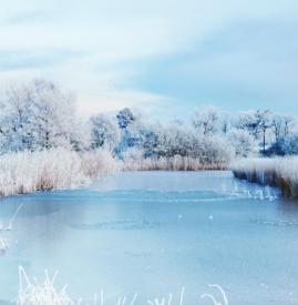 寒露后面是什么节气 寒露下一个节气是霜降