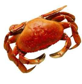 螃蟹可以空腹吃吗 不空腹吃会更好