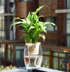 卫生间放什么植物最好 这些植物放卫生间最适合不过