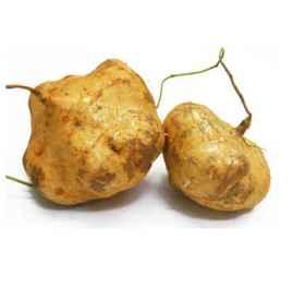 凉薯发芽了还能吃吗 发芽的凉薯最好熟吃
