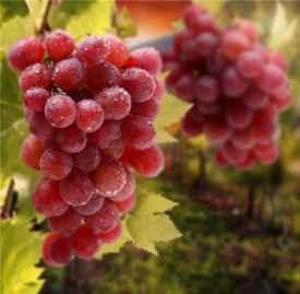 吃葡萄有什么好处 这几种好处你必须了解