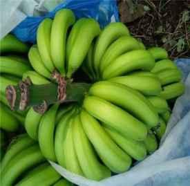 香蕉的功效与作用 香蕉配豆浆减肥法