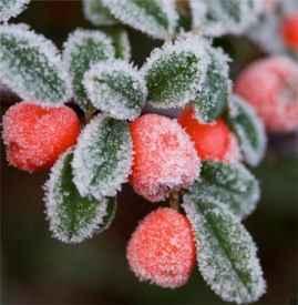 冬天吃什么菜好 适合冬天吃的6种蔬菜