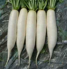 白萝卜不能和什么一起吃 白萝卜的6个禁忌搭配