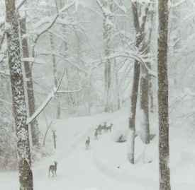 冬天护手霜 什么样的护手霜最适合冬天用