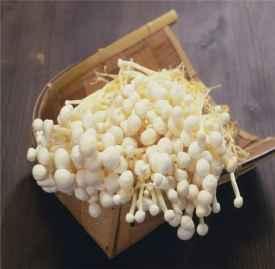 蘑菇的家常做法 多种菇类的做法及作用介绍