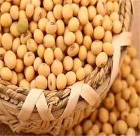 大豆的功效与作用 每天吃它轻松赶走6大疾病