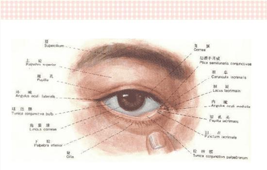 开外眼角有什么用 能改善这三类小众人群的眼睛  开外眼角眼睛会大吗,开外眼角目的