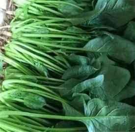 菠菜花生米的功效 菠菜加一物变成了钙片