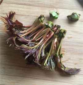 香椿芽产妇能吃吗 香椿芽是发物要慎吃