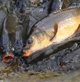 过年吃什么鱼最好 这四种好意头的鱼必吃