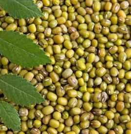 绿豆为什么会生虫 储粮害虫的三个来源