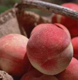 水蜜桃的毛能吃吗 水蜜桃怎么洗掉绒毛