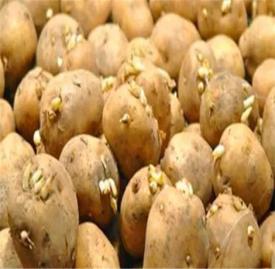 吃土豆的好处 土豆这样吃营养价值高