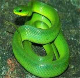 梦见蛇预示着什么 这个预示最近财运会很好