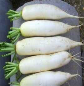 白萝卜药用价值 常吃白萝卜身体棒