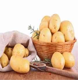 土豆的功效及飲食禁忌 長期吃土豆好處多