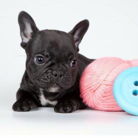 t恤改狗狗衣服做法 最简单的两种方法在这里