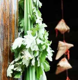 端午节为什么要挂艾草 清明插柳端午插艾