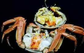 母螃蟹有蟹膏吗