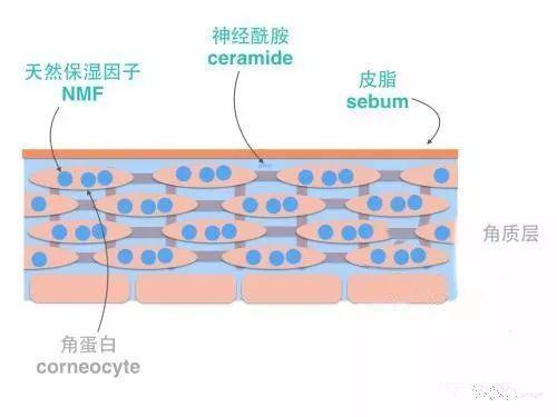 神经酰胺适合什么年龄
