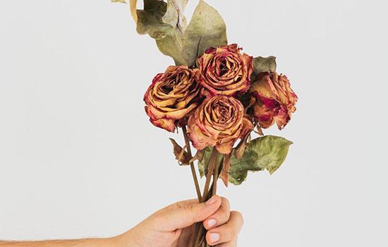 情人节送什么花比较好 送什么花最浪漫