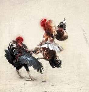 清明节为什么要斗鸡 古代流传下来的习俗