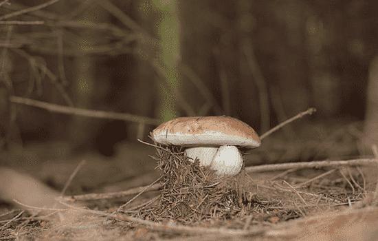 清洗拖把的妙招 拖把上长了小蘑菇怎么办