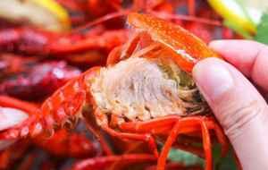 """小龙虾为什么这么多人吃 小龙虾怎么变成""""夜宵网红""""之王的"""