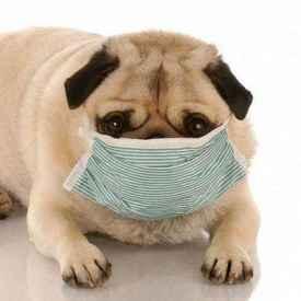 夏季流感怎么辦?這幾種方法帶你快速擺脫流感