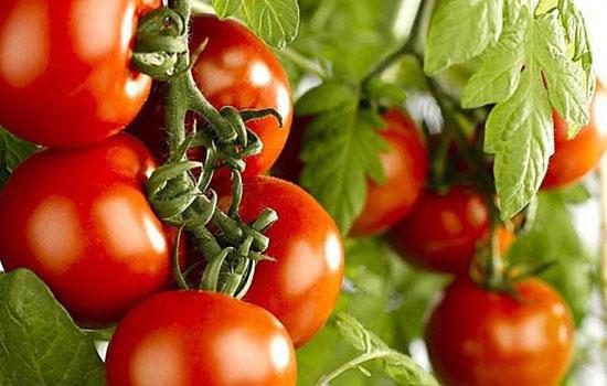 西红柿可以做面膜吗