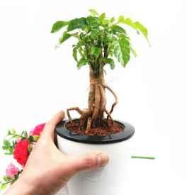 卫生间摆放什么植物利风水