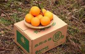 冰糖橙產地哪里的最好 最好吃的要屬湖南麻陽冰糖橙