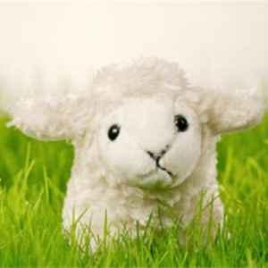 三七毛和纯羊毛的区别 怎么挑选羊毛制品