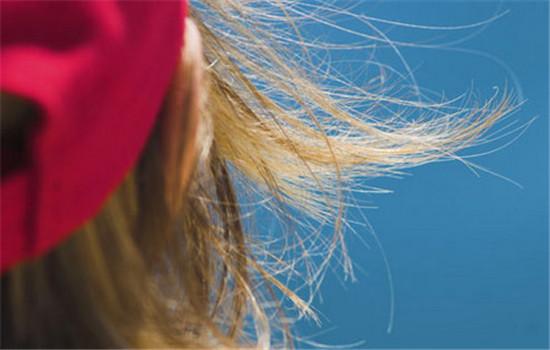 【美天棋牌】头发打薄后头发干枯毛躁怎么办 日常怎么护理头发
