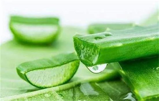 芦荟水可以当爽肤水用吗 芦荟水的正确使用方法