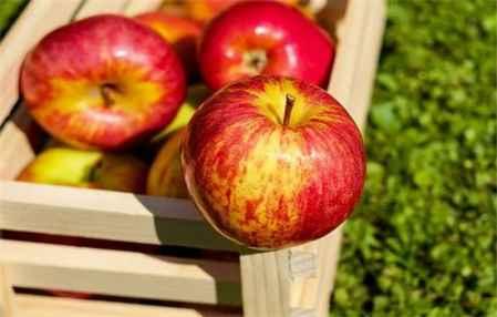 苹果减肥法可以吃鸡蛋吗 苹果减肥法做法(图4)