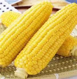 為什么減肥期間吃玉米可以減肥 玉米和蘋果誰熱量更高