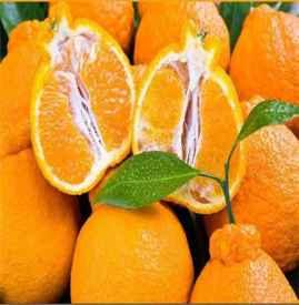 ?丑橘几月份算应季