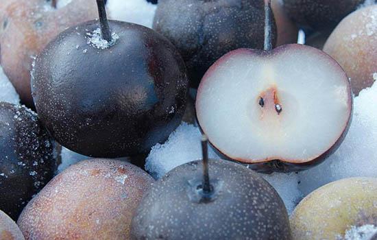 冻梨买回来是软的是坏了吗 冻梨化了以后怎么保存