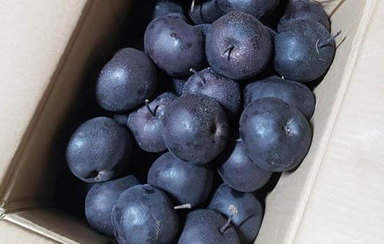 冻梨要在冰箱冻多久 冻梨冻几天能吃