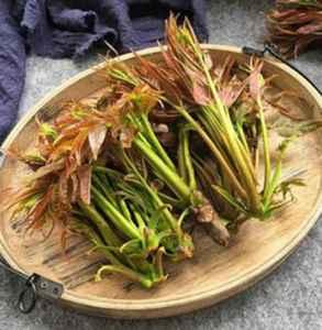 香椿芽和刺嫩芽的区别 香椿芽和刺老芽是一样菜吗