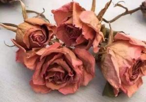 干玫瑰色是什么顏色? 干玫瑰色和豆沙色一樣嗎
