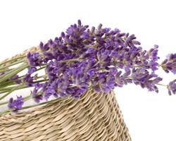 薰衣草精油如何使用 功效与作用有哪些