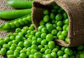 豌豆什么时候播种? 豌豆和荠菜能一起吃吗