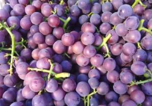 巨峰葡萄怎么保存 ?巨峰葡萄功效与作用有哪些