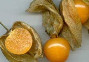 菇茑是凉性还是热性的 菇茑孕妇可以吃吗