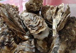 海蛎子能放多久 海蛎子能冷冻吗
