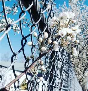 隔離霜和防曬霜可以一起用嗎 和防曬乳的區別