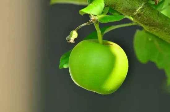 <b>产妇坐月子可以吃什么水果 这六种很合适</b>
